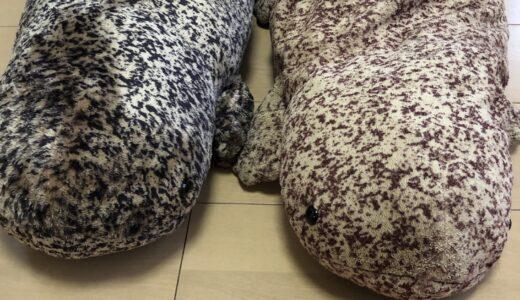 【京都水族館】7年使ったオオサンショウウオのぬいぐるみを新品と比較してみた